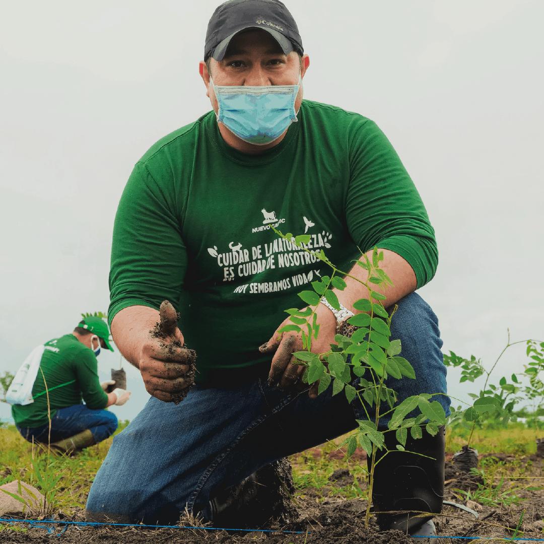 Reforestation Program - Nicaraguan beef